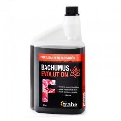 BACHUMUS EVOLUTION FLORACIÓN