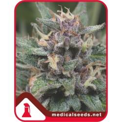 BLUEHELL MEDICALSEEDS