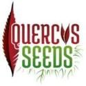 Quercus Seeds